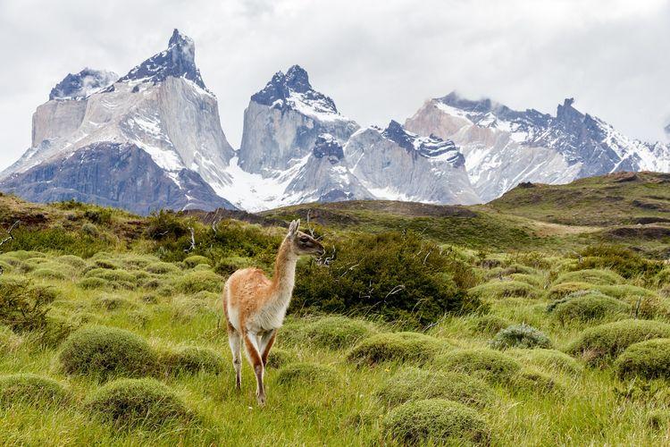 Chile Akan Buka Kembali Perbatasan Desember 2020