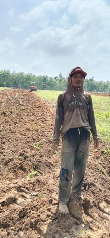 Penangkaran Penanaman VUB Sorgum Tingkatkan Agribisnis Lampung Utara