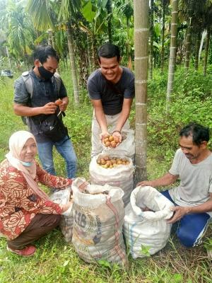 Panen Pinang di Bangka, Harga Pantas untuk Eksportir
