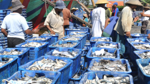 Eksportir Swasta Yakini Jalur B2B untuk Pemasaran Ikan di Brazil