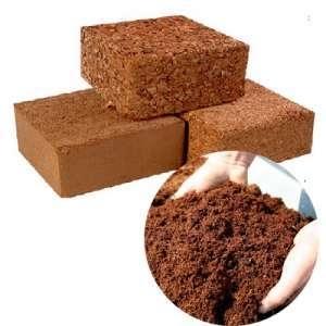 Kelapa Genjah Entok perlu industri pengolahan menjadicoco peat, coco fiber